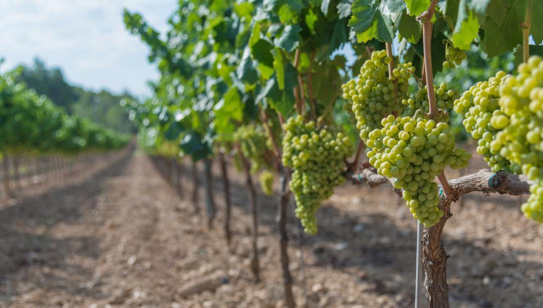Entente sur les prix et vins d'alsace